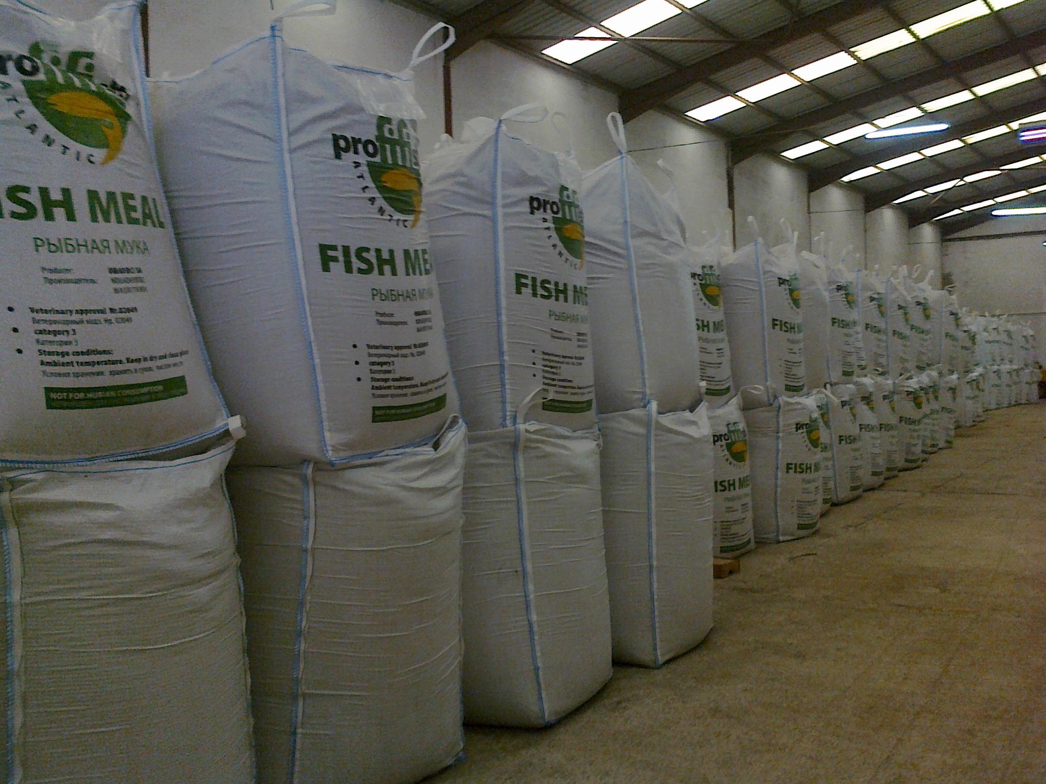 Sarma fish fish meal for Fish meal fertilizer